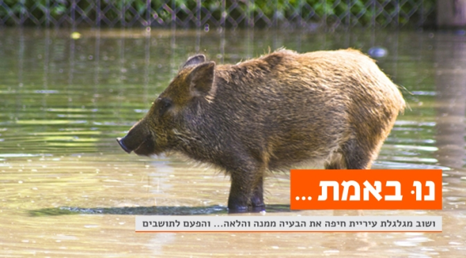 חזירי הבר בחיפה
